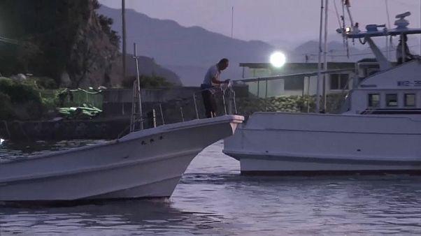 Delfinjagd beginnt: 1700 Säuger freigegeben