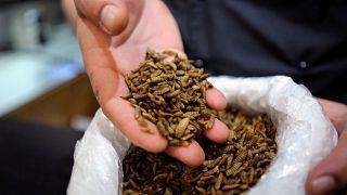 Равиоли с червячками: вкусно и полезно