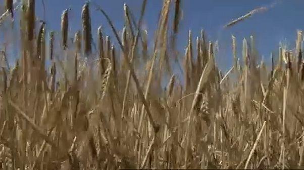 EU-Studie: Klimawandel bedroht Landwirtschaft