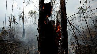 Brennender Regenwald in Brasilien bei Apui, 3. September 2019.