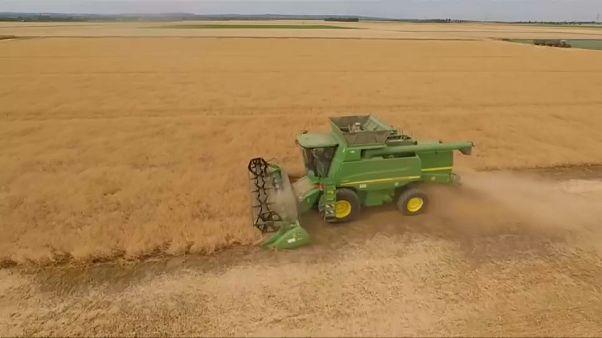 Así afecta el cambio climático a la agricultura europea