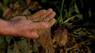 A man holds dry earth from a sugar beet field, as extreme drought hits France, in Cantaing-sur-Escaut, France, August 27, 2019