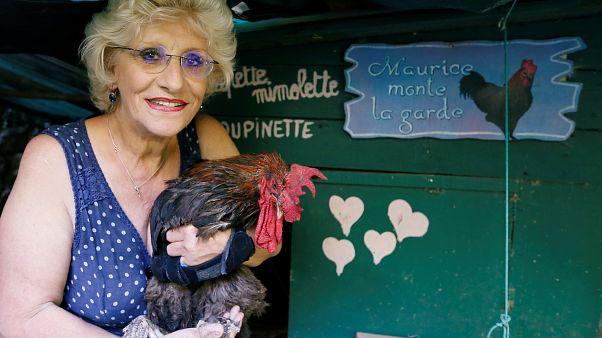 La Justicia francesa le da la razón al gallo Maurice