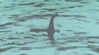 A Loch Ness-i szörny talán egy nagy angolna volt