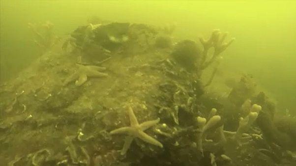 Eltűntek a halak egy dán tengerszorosból