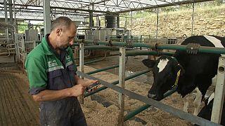 شاهد: الأبقار البريطانية تدخل دائرة استغلال تكنولوجيا جي5