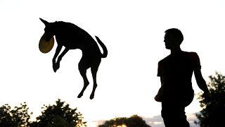 İspanya'nın bir kentinde çocuk sayısını geçen köpekler için sahiplerine 'dışkı' vergisi