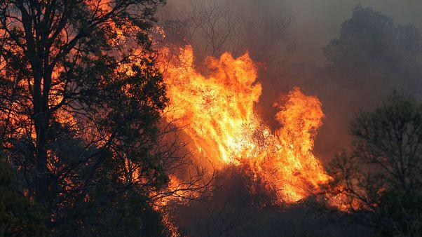 آتشسوزی گسترده در چندین ایالت استرالیا