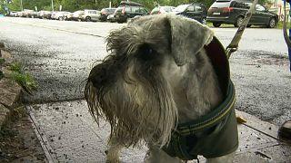 Собак в Норвегии убивает таинственная болезнь