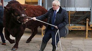 UK, Johnson si prepara a un nuovo voto alla Camera per le elezioni anticipate