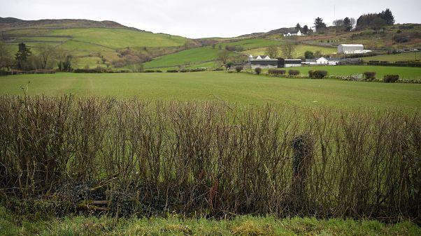 400 millió fát akar elültetni Írország