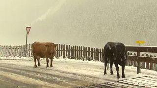 Leesett az első hó Ausztriában