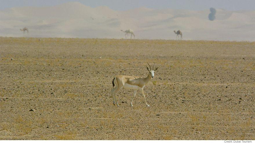 A proteção da biodiversidade no Dubai