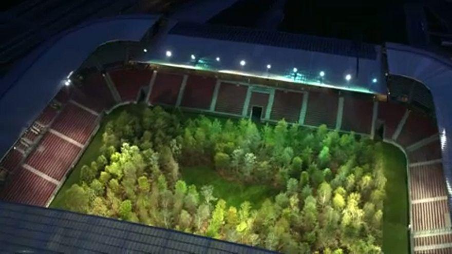 جنگلی در استادیوم فوتبال
