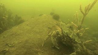 Dinamarca: Desaparecimento dos peixes no Báltico desespera pescadores