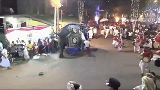 Sri Lanka'da geçit töreninde ürken filler kalabalığa daldı: 17 yaralı