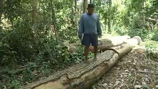 Desflorestação na Amazónia aumenta em relação a agosto de 2018
