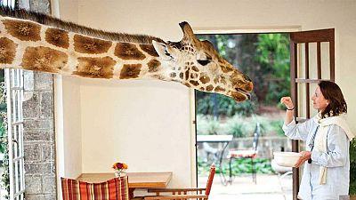 Breakfast time at Giraffe Manor, Kenya