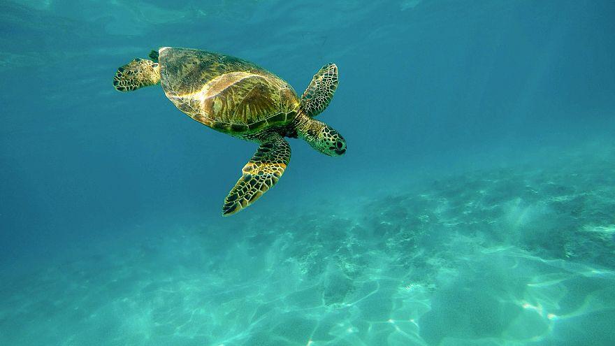 WWF warnt: EU verfehlt Ziele zum Schutz der Meere