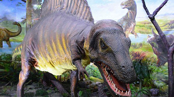 روزی که دایناسورها مُردند؛ برخورد سیارک، سونامی عظیم، آتشی هولناک و سپس تاریکی