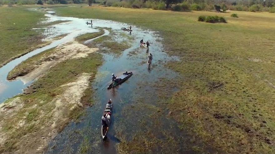 Into the Okavango, donde el hombre no es el rey