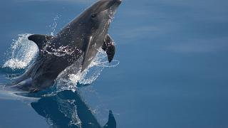 'Cocktail of pollutants' found in English Channel dolphins