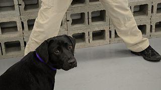 CIA'de eğitilen K-9 köpeği Lulu