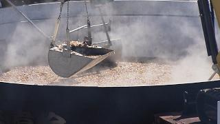 芋煮会 Süßkartoffelparty