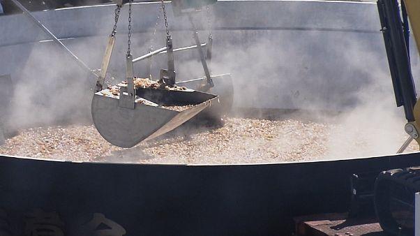 استقبال از پائیز در ژاپن؛ پخت «ایمونی» در دیگی به قطر ۶.۵ متر