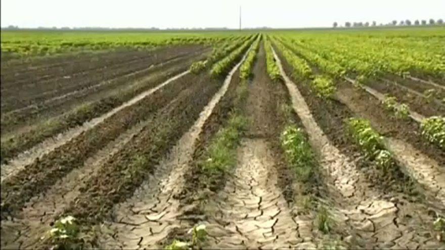 El cambio climático pone en riesgo el futuro de la agricultura