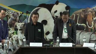 شاهد: مسؤولو حديقة حيوان تايلاندية يقفون دقيقة صمت حداداًعلى نفوق باندا