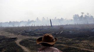 Defender el Amazonas de la deforestación te puede costar la vida en Brasil, denuncia HRW