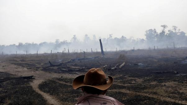 Defending the Amazon forest from deforestation 'can cost you your life' says new HRW report