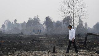 Indonesia: Presidente ispeziona le foreste bruciate