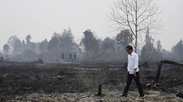 Indonesia's president inspects burnt forests and consequences of the smoke