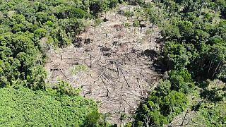 Drónokkal védik az esőerdőt