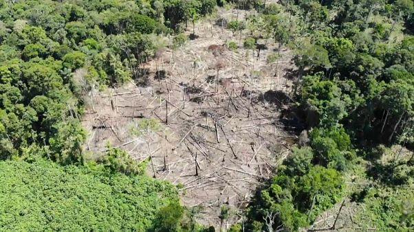 Tribos indígenas recorrem à tecnologia contra a desflorestação