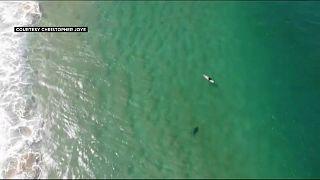 Video | Köpek balığının saldırısından drone ikazı ile kurtuldu