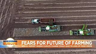 EU warns climate change could wipe out crop production in Europe