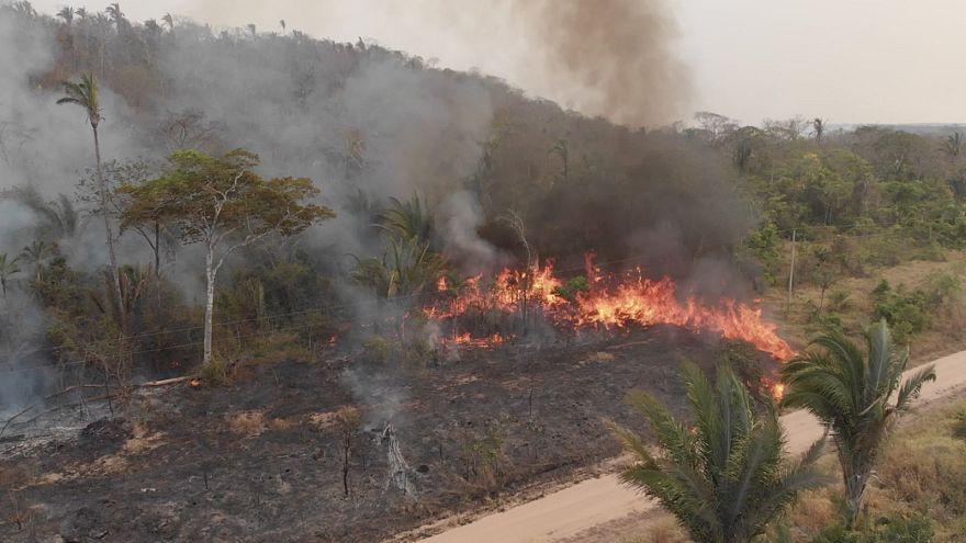 Пожары в Амазонии: Боливия просит помощи