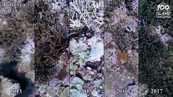 Игровые технологии в помощь кораллам