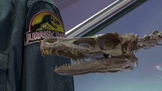 Props from 1993's Jurassic Park will go under the hammer