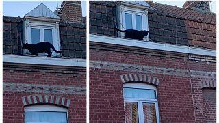 Immaginatevi di aprire la finestra e trovarvi di fronte una pantera