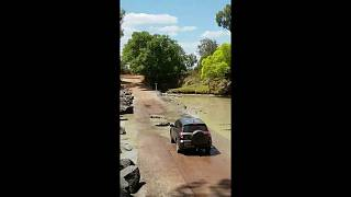 Vehicle stopped in its tracks by crocodiles lying in the road