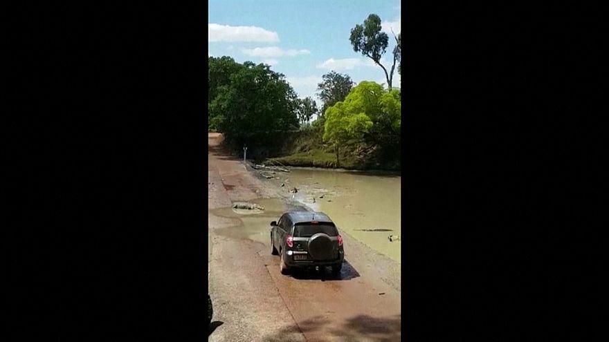 کروکودیلها «خطرناکترین» جاده استرالیا را مسدود کردند