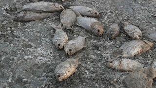 Grèce : carnage en eau douce