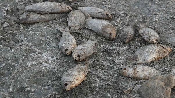 Замор рыбы в Греции