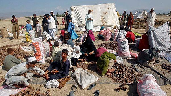 Afgan tarım işçileri