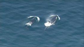 Szörföző gyilkos bálnák a Bainbridge-szigetnél