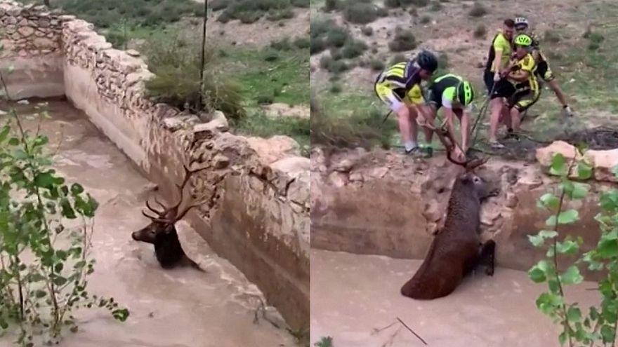 So rettet man einen Hirsch aus einem Wasserbecken